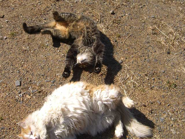 Farm kitties sunbathing