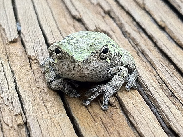 Tiny moss covered frog