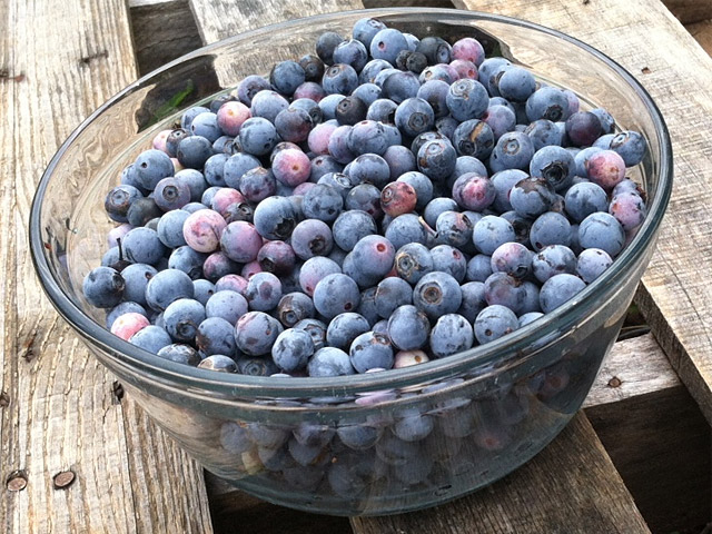 Home grown blueberries
